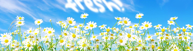 Slider foto frisse bloemen, website FRESH vormgeving, oss